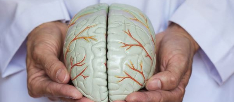 doctor holding a model brain